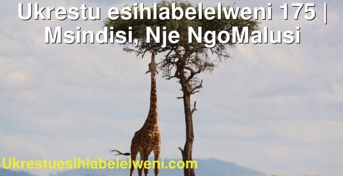 Ukrestu esihlabelelweni 175 | Msindisi, Nje NgoMalusi