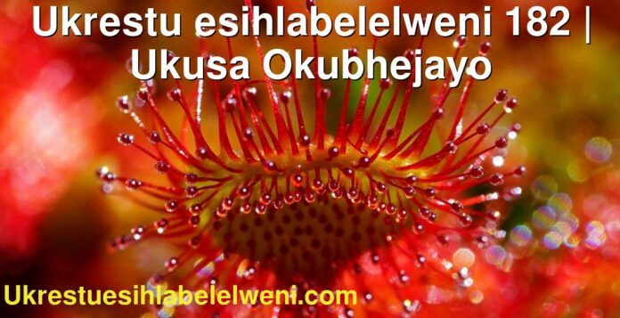 Ukrestu esihlabelelweni 182 | Ukusa Okubhejayo