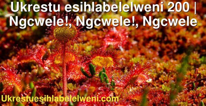 Ukrestu esihlabelelweni 200 | Ngcwele!, Ngcwele!, Ngcwele