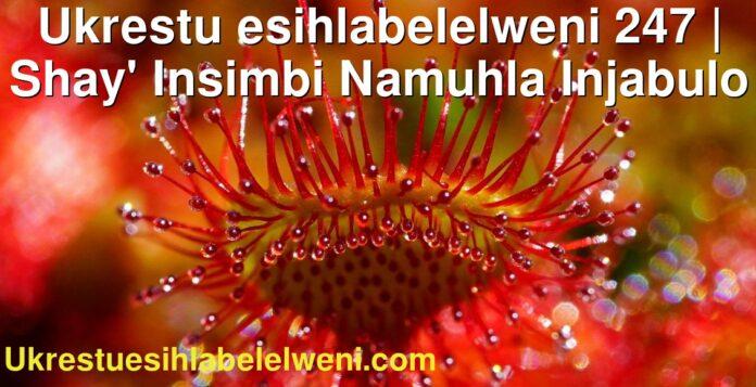 Ukrestu esihlabelelweni 247 | Shay' Insimbi Namuhla Injabulo