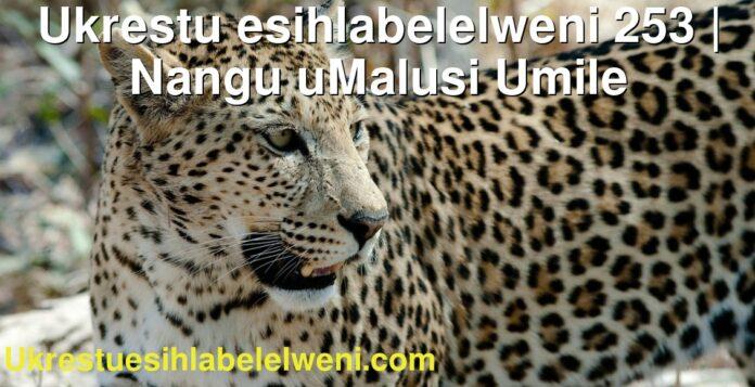 Ukrestu esihlabelelweni 253 | Nangu uMalusi Umile