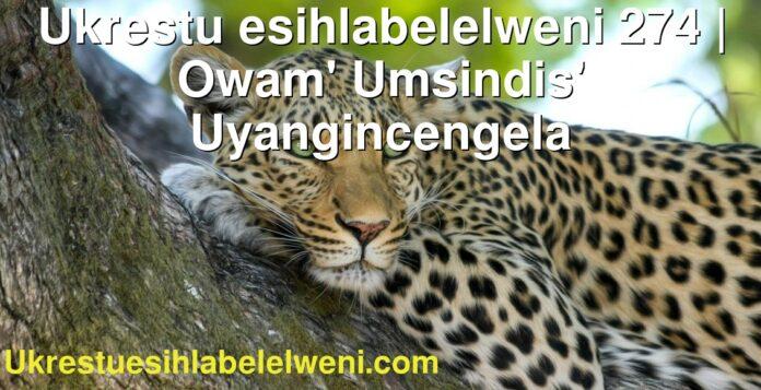 Ukrestu esihlabelelweni 274 | Owam' Umsindis' Uyangincengela